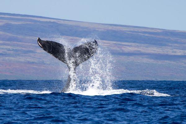 «Токийский кит» продал биткоины Mt. Gox ещё на $230 млн.